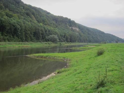 Eine Vielzahl Buhnen an beiden Ufern bieten interessante Anlaufstellen, hier die beweideten Buhnen von Pegestorf.