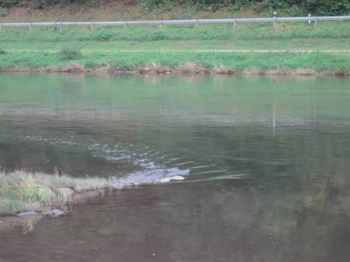 Glasklares Wasser - kleine Strömungsstudie zwischen zwei Buhnenfeldern.