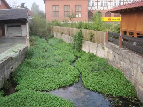 Im Waldeckischen freue ich mich über dieses Beispiel schonender Gewässerunterhaltung.