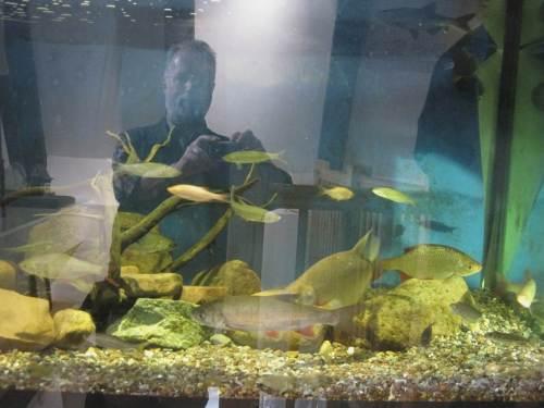 Selten habe ich eine solche Vielfalt an Weissfischarten an einem Platz gesehen. Vorn, wir waren uns einig, dass das kein Döbel ist, ein großer Hasel - schwierig, schwierig. Alande sollen auch gerade nicht im Aquarium vorhanden sein.