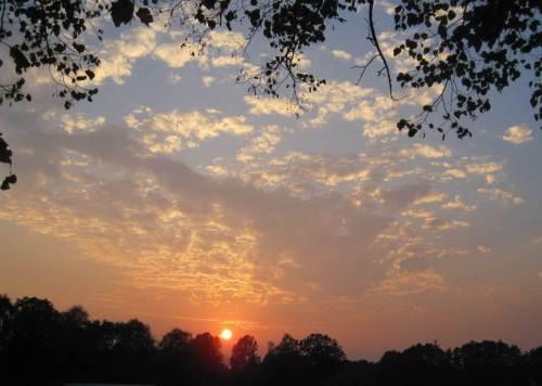 Sonnenuntergang hinter Bäumen - jenseits der Maislandschaft sind bei abendlicher Radtour doch noch Bäume erkennbar.