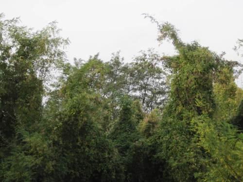 Schon zu erkennen - Amazonien ist überall.