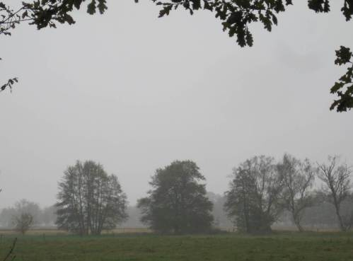 Auch in Grau haben herbstliche Baumsilhouetten etwas ...