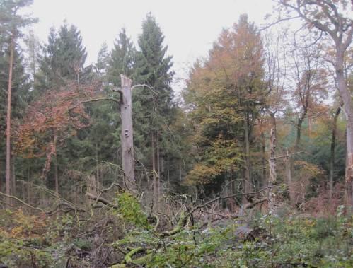 Sehr anschaulich für den Gang der Welt - Urwaldparzelle im heutigen, durchdachten Wald.