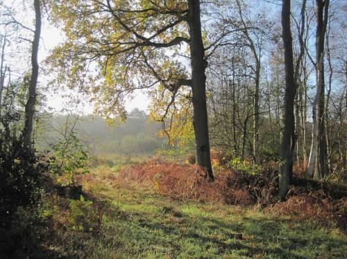 Herbstsonne am Rand und über der Bachaue.