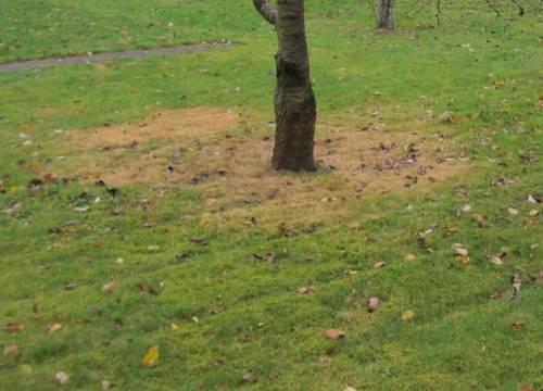 Baumscheibe gelborange bekleckert, giftig für Pflanze, Boden, Grundwasser - Geld verschwendet.