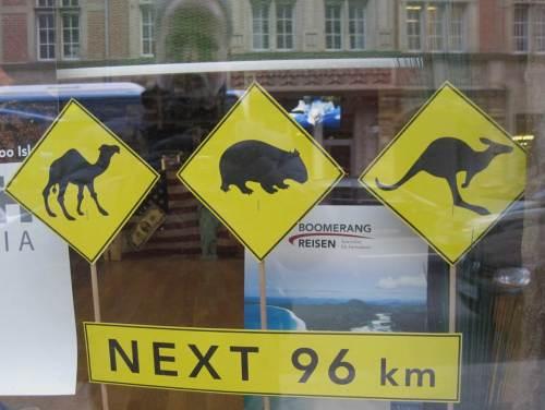 """Uuups, Neozooen in Berlin - offenbar Langstrecken-Migratoren, oder """"nur"""" aus dem Zoo entwichen?"""