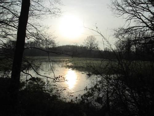 Neujahrssonne überm Wiesenwasser. Mal abwarten, ob der Wasserstand hier im NSG Obere Wümmeniederung 2015 für die Amphibienentwicklung ausreicht.