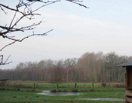 Wiesenwasser vor Bruchwald.
