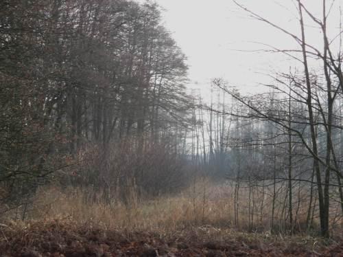 """Die Natur macht`s vor: Erlensukzession am Bach zwischen Moränenwald und Bachaue. Diese unkrautartige Dichte wird sich ganz allein zu einem lichten Erlenbachsaum entwickeln. - Oh, ihr """"behutsamen Pfleger"""", haltet ein! Die Natur praktiziert das seit Jahrmillionen, weiss es besser als wir."""
