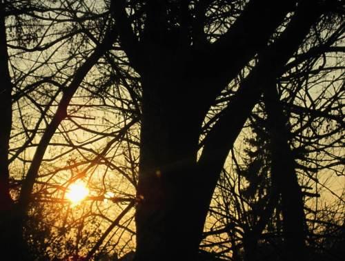 Morgengruß 2015 aus dem nicht nur baumartenreichen, bienen-, igel- uvm-freundlichen Biologengarten.