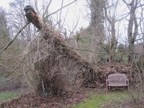"""Nun liegt der Stamm auf einem Totholzhaufen und – vorn im Bild – einem unserer Haselnussbüsche, von denen in den """"Hölzchen und Stöckchen""""-Beiträgen oft die Rede ist."""