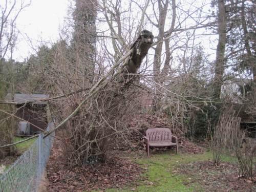 So etwas nennt man sauberen Fall - unser Zaun zum Nachbarn ist frei, 3 Äste, die im Bild noch sichtbar sind, abgesägt.