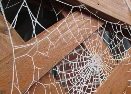 Durch Raureif sichtbar(er) gemacht: Unsere Terrasse ist gut geschützt.