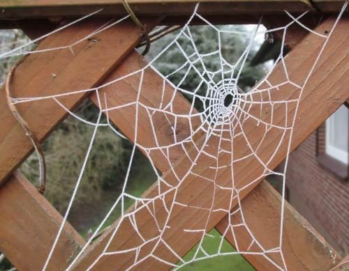 Divers in Form und Größe sind eine Vielzahl Spinnennetze gewoben.