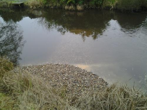 Im gewaschenen Kies noch enthaltene Resttrübe zeigt schön den fast Ufer-parallelen Stromstrich. Wie beabsichtigt findet  hiernur eine geringe Ablenkung Richtung Gewässermitte statt.