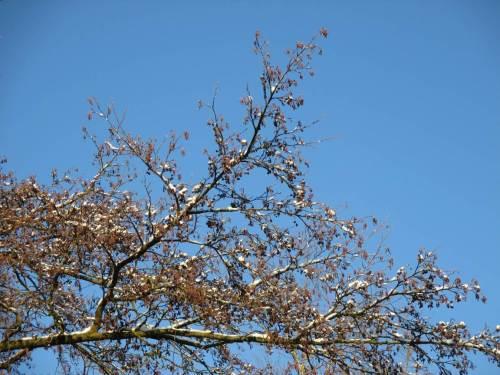 Vogel-, bald auch Bienenfreude (und Allergiker-Qual): massenhaft Samenstände auch noch nach den Stürmen und neue Lämmerschwänze an der Erle.