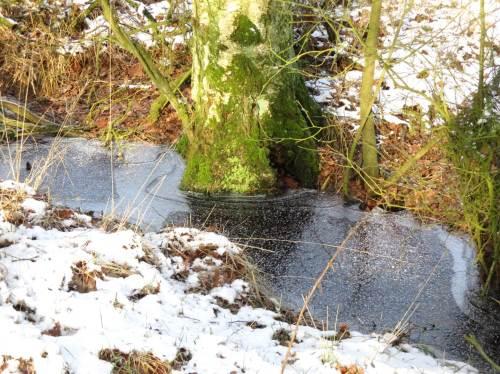 Hier steht mehr Wasser als am Startpunkt - anderer Boden auf kurzer Strecke, Bodenvielfalt durch Eiszeit und Zeitfolgen.