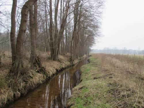 """Am benachbarten Bach, unglücklich mit dem Namen Damm""""graben"""" versehen, deutet sich noch die Mäandertendenz des naturnahen Fliessens an. Die soll nun unterstützt werden."""