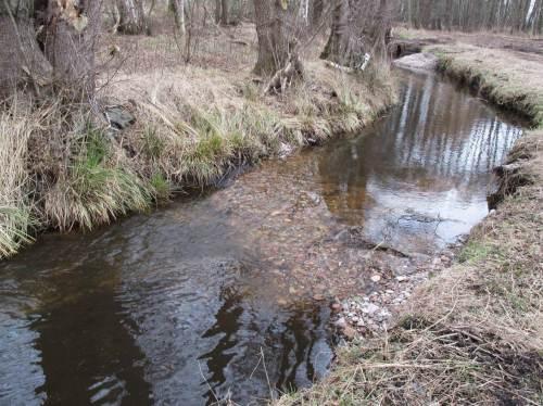 Sehr gut gelungen ist auch die Lenkbuhne am Dammgraben. Vorn rechts muss noch das Ufer etwas angeschüttet werden, um ein Ausbrechen des Bachs an unerwünschter Stelle zu verhindern.
