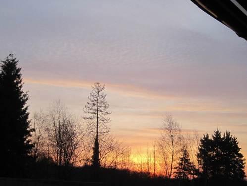 Zwei Raben erwarten den Sonnenaufgang.