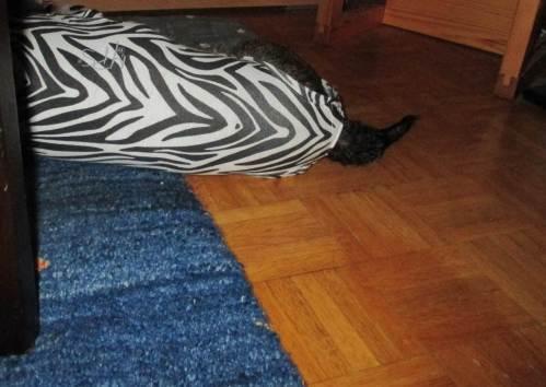 Wer oder was versteckt sich da hinterm Sessel!? Ein Zebra, oder ein Albino-Tiger?