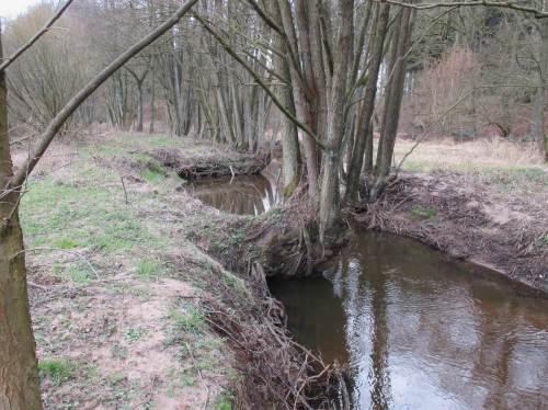 An der Krückau selbst wurde jahrzehnteland nur ein einseitiger Erlensaum toleriert. Dieser geht nach und nach verloren, an den beiseitig steil erodierten Ufern können sich Jungbäume nicht erfolgreich ansiedeln.