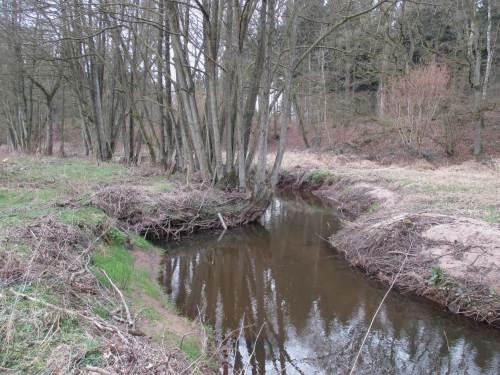 Nach Baumverlust bleibt eine übertiefe, überbreite Gewässerwüste.