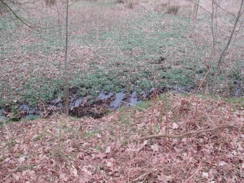 Am Fuß des hoch liegenden Moränenhangs treten Quellwässer am Rand der Aue aus.