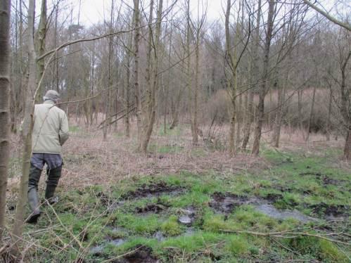Beeindruckend stellt sich die vielfältige Bodenentwicklung, hier zu sumpfigem / anmoorigem Teilstandort dar.