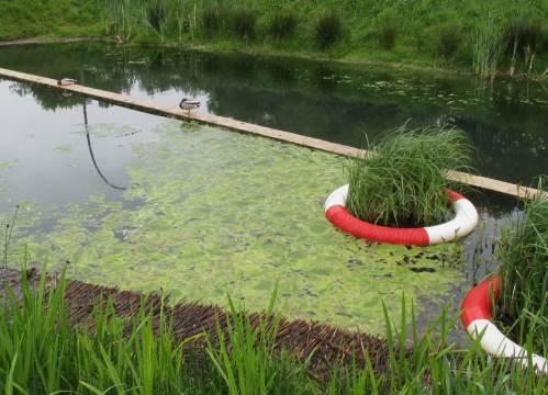 """Wer """"Natur lesen"""" kann, kann auch viel lernen - hier: Minimumfaktoren ausgeschaltet, Licht im Überfluss, unschöne Ergebnisse - Algenmassen, die von ihrem Entstehen bis zum Abbau das Gewässersystem überlasten."""