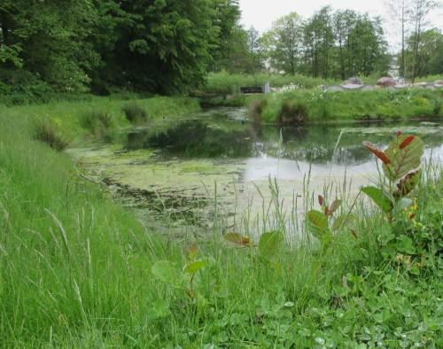 """Weiterer Lerneffekt: Wer gärtnert, arbeitet allzu oft gegen die Natur - und stöhnt dann über die """"Garten-Fron"""". Hier wäre eigentlich das Reich der Erle und ihrer Begleitflora ..."""
