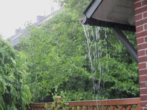 Gestern Nachmittag war es dann so weit: ein kurzer, starker Schauer brachte 15 mm Regen. - Der wusch so manches ab, auch die Fragezeichen des vorigen Fotos.