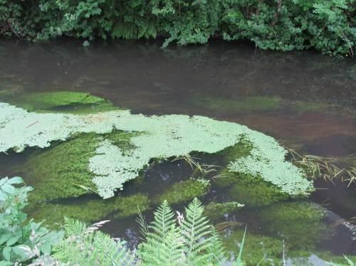 Der Besatzort für die Bachforellen - jede braucht ihr eigenes Versteck. Gute Ufer- und Lebensraumstruktur dazu finden sie hier.