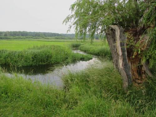 Und schon sind wir mittendrin in der Talaue. Tegeler Fließ - Wiesen, Bach und alte Weide.