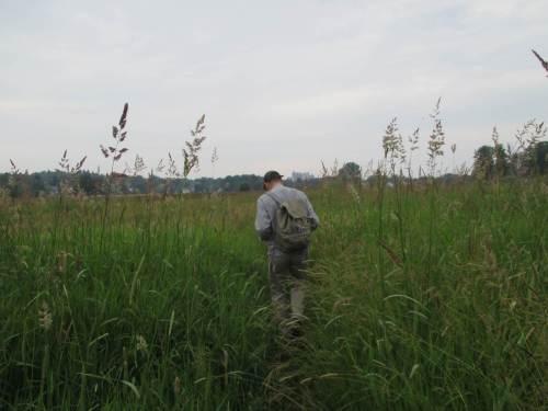 Und weiter geht`s - entlang von Wiesen, Weiden, über Moor, teils durch kopfhohen Bewuchs.