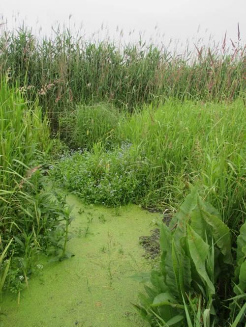 Von nass bis feucht - Pflanzensukzession, von Wasserlinsen über Stauden bis zu Röhrichten.