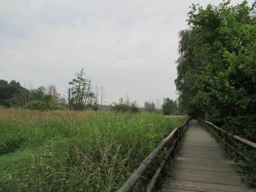 Über den Holzbohlensteg geht es über wieder vernässtes Moor. Die absterbenden Bäume zeigen die entwässerte Vergangenheit.