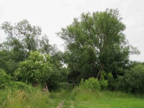 Auwaldreste, Gedanken zu Zeit und Größe - die Jungs da hinten sind keine kleinen ... Die Weide ist älter und etwas größer, hat schon viel gesehen.