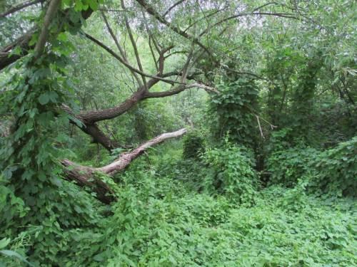 Es rankt an Holz und Totholz, als wären wir im Dschungel.