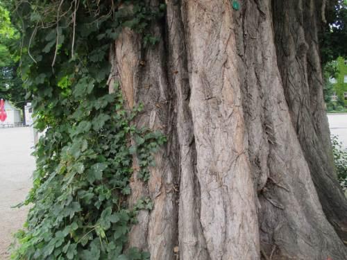 Auch Baum-Veteranen sind im Gelände zu bestaunen.