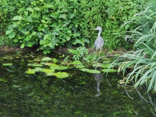 Andere Grabenseite, Vogel mit Spiegelung - da lässt es sich doch ruhiger jagen.