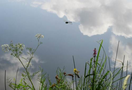 Das alles und noch viel mehr gibt`s im Naturpark Lüneburger Heide zu sehen - hier ein kleiner Eindruck mit Bio-Helikopter von den nahen ehemaligen Kieselgurgruben.
