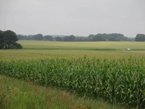 In der Horizontalen, bis zum Horizont: AgroDiversität nennt man das heute wohl. Mais, Mais, Mais.