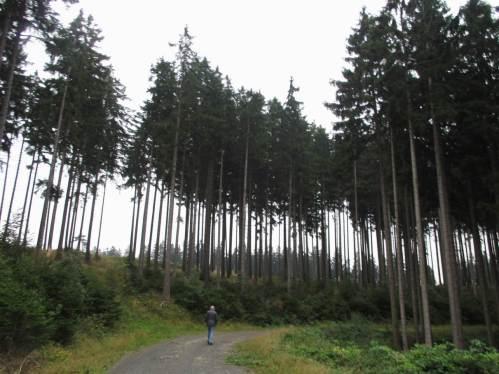 Der kleine Mensch vor großer Natur - Bäume als Maß der Zeit, wir sollten mehr darüber nachdenken (und nachhaltig handeln).