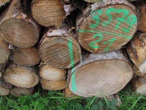 Die Holzqualität erscheint wetter- und klimabeeinflusst sehr variabel.