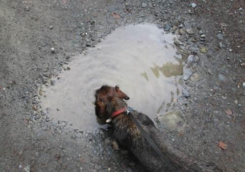 Nächtliche Regenfälle brachten guten Service für den Wanderer: frisches Wasser erfrischt halt am Besten.