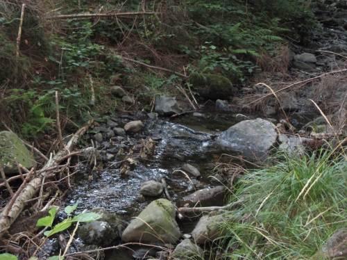 Keine Trockenheit, aber doch Niedrigstwasser charakterisiert die Harzbäche.
