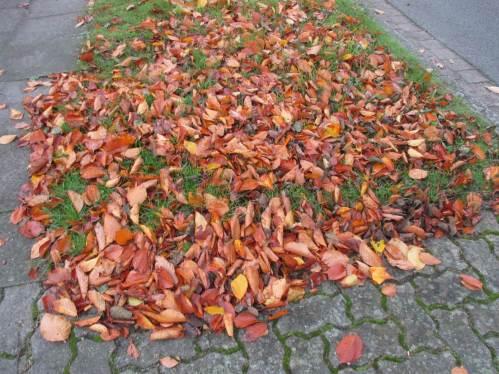 Buchen- und anderes Herbstlaub