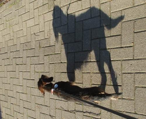 Huuuhh, der große schwarze Hund!